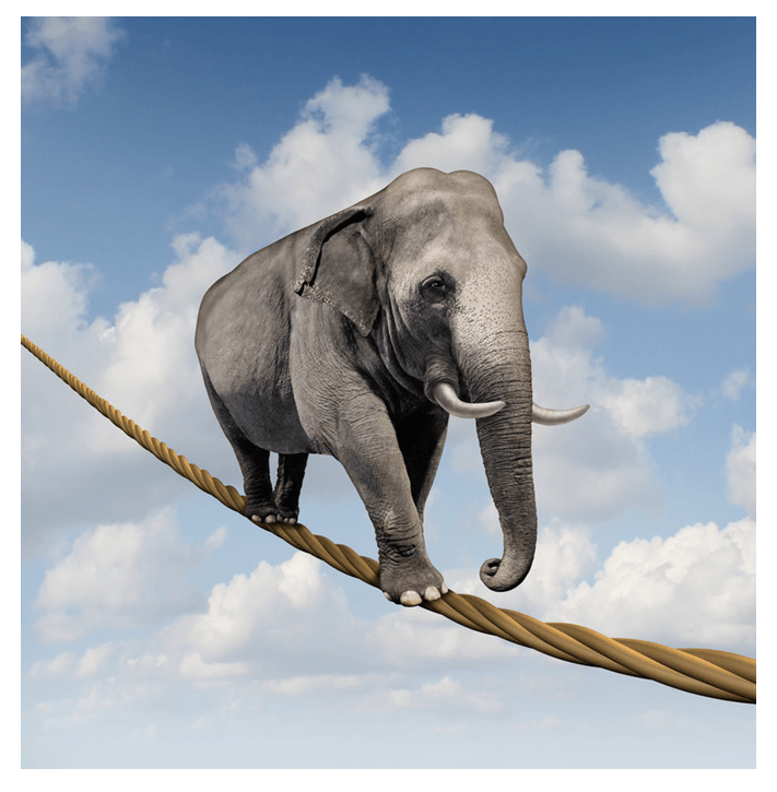 artist's rendition of an elephant walking on a tightrope