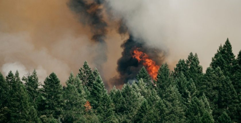 forest fire raging