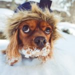Pet Safety During Winter Months