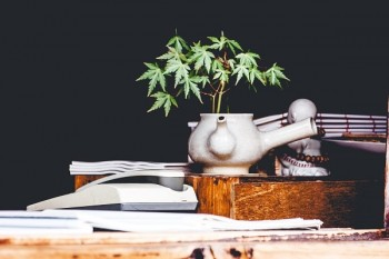 cannibis plant growing out of a ceramic teapot placed on a workdesk