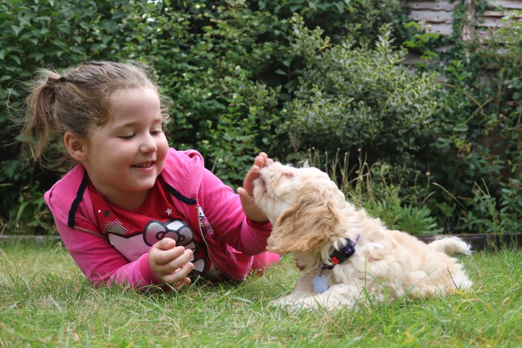 toddler with puppy in a garden